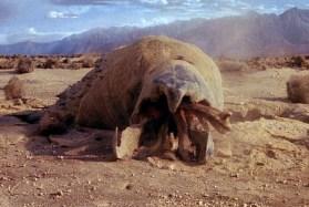 tremors-1990-graboid-2