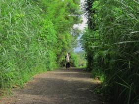 Berjalan menyusuri jalan kehidupan