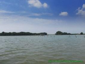 Hutan mangrove dari jauh.