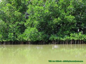 Hutan mangrove...