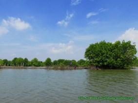 Hutang mangrove_6