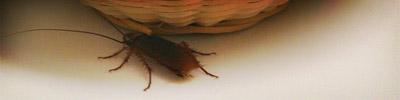 The SXSW Cockroach