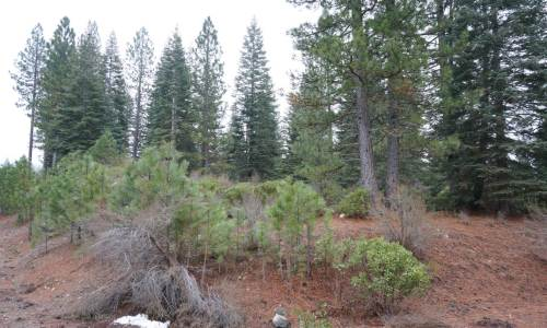 Mount Shasta View Lot Hidden Meadow Subdivision Land 4