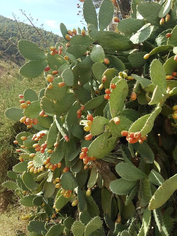 cactus web