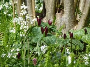Trilliums and white spanish bluebell
