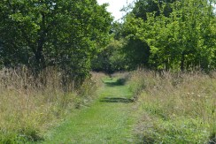 A pathway through the orchard