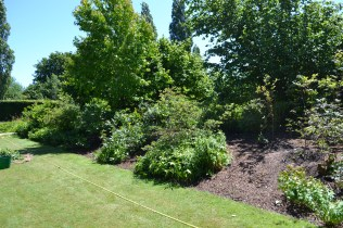 Mulched and watered.