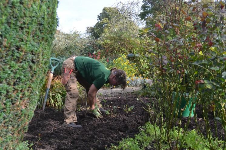 Liz working in the Cottage Garden.
