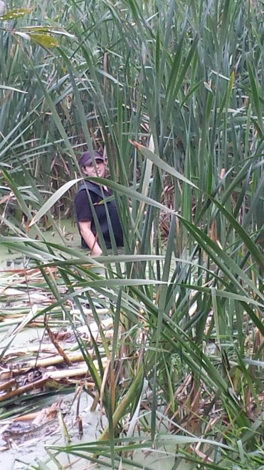 Reeds being pulled out.