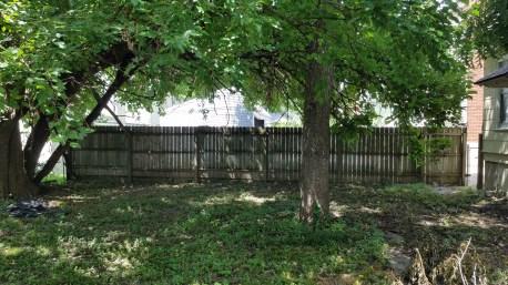 Mulberry tree far left, walnut tree right