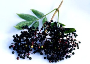 Elderberries to help heal colds and flus.