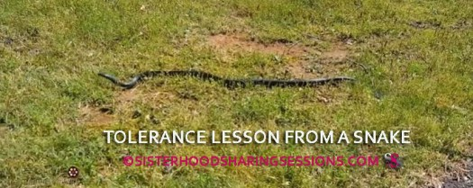 Tolerance Lesson From A Snake