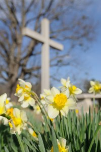 00 Easter daffodil_and_cross
