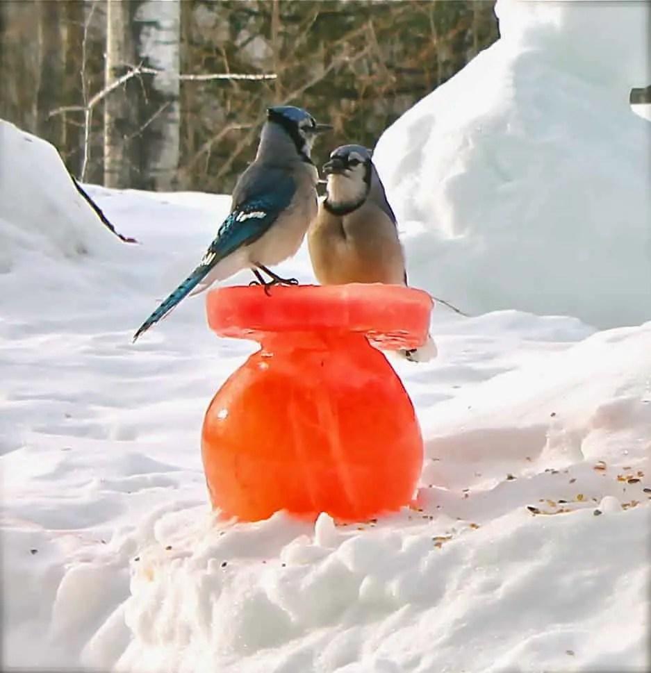 Can Bird Feeder Craft