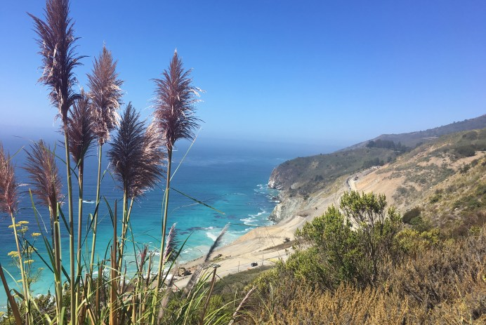 Cattails in the forefront of a landscape view of the ocean and a cliff side Big Sur California