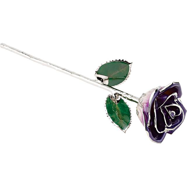 Purple Rose With Platinum Trim 1