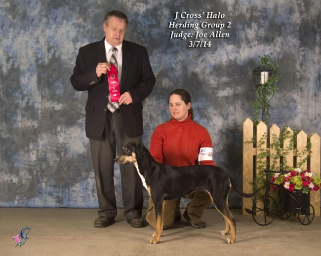 Halo'sfirst Group 2 at the UKC Michigan Classic