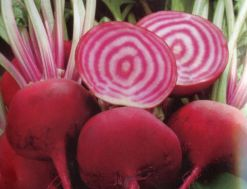 beetroot choggia
