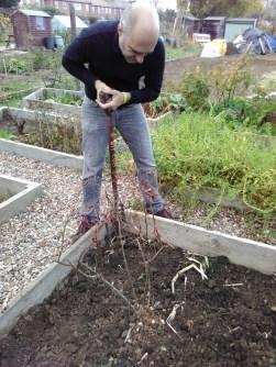 Preparing soil for winter