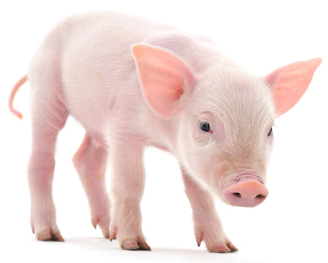 farm animal facts by