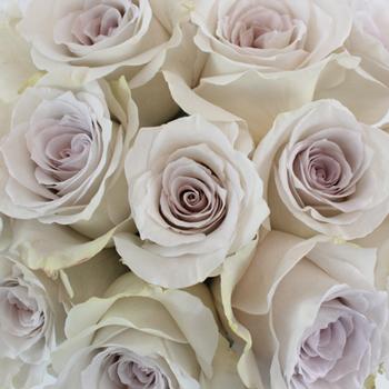 gray flowers wholesale bulk