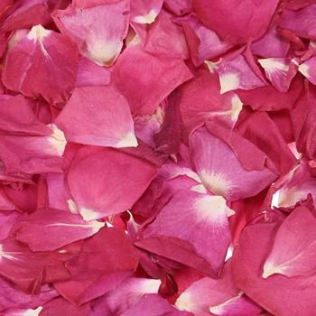 falling in raspberries dried