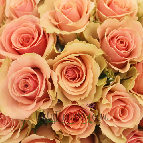 peachy pink sweetheart roses