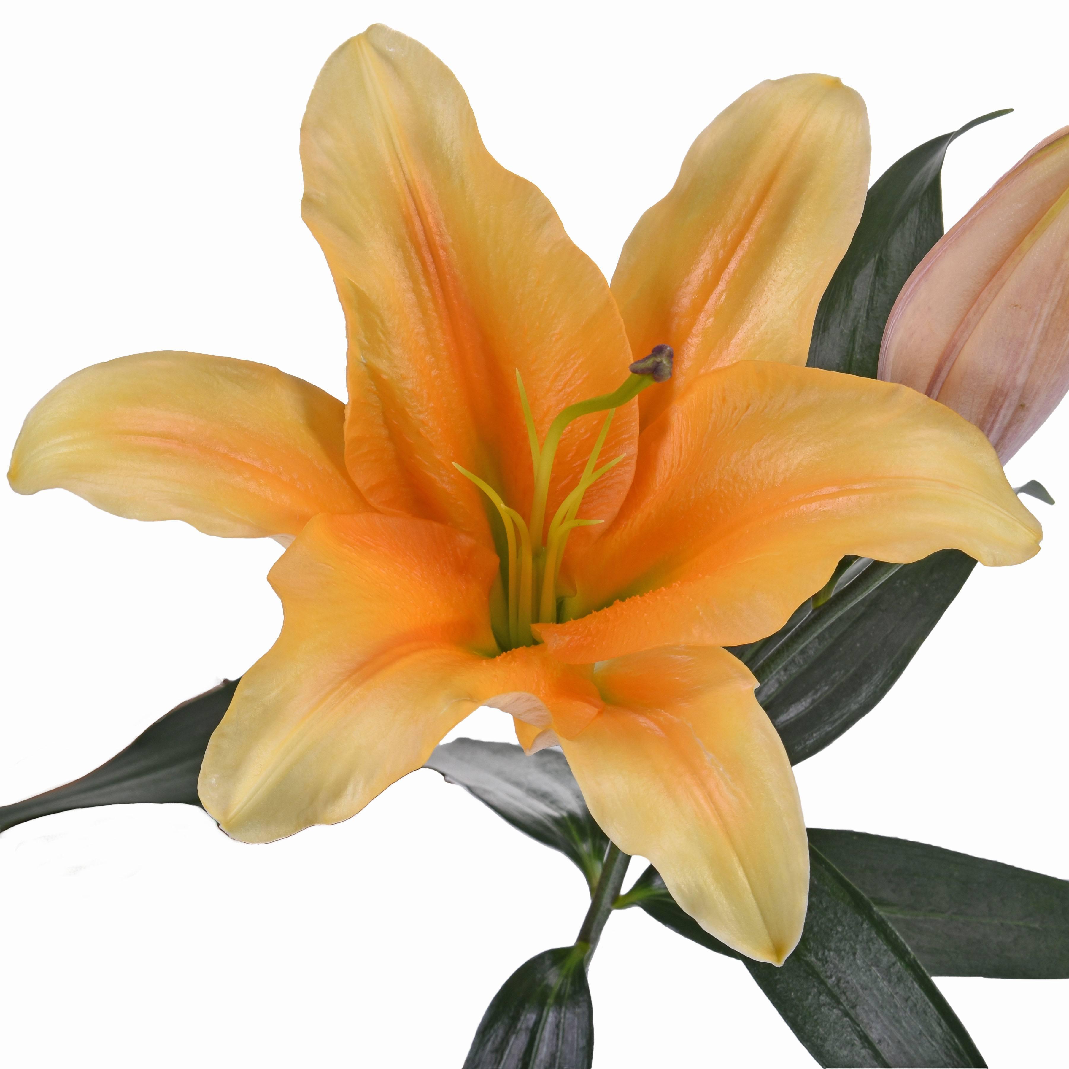 lilies wholesale bulk flowers