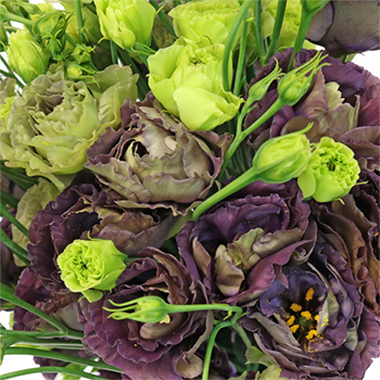 gothic romance lisianthus flower