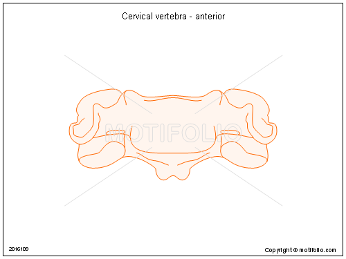 cervical vertebrae diagram t flip flop circuit vertebra anterior illustrations keywords illustration figure drawing image