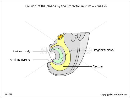 A Baby Diagram. Diagram. Auto Wiring Diagram