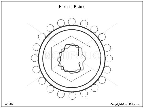 Hepatitis B virus Illustrations