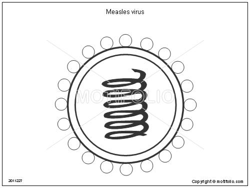 Measles virus Illustrations
