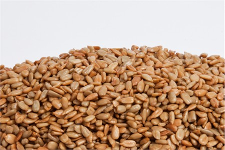 Unsalted No Shell Sunflower Seeds 1 Pound Bag from Nuts