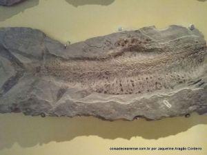 23-Museu de paleontologia (42)