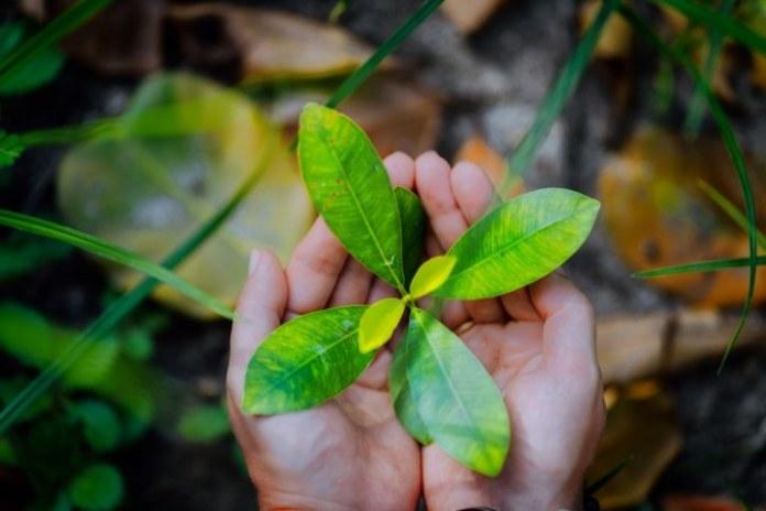 Dia Mundial do Meio Ambiente é celebrado neste 5 de junho