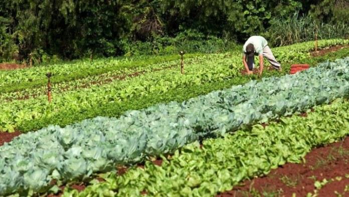 Garantia-Safra autoriza pagamento para mais de 60 mil agricultores