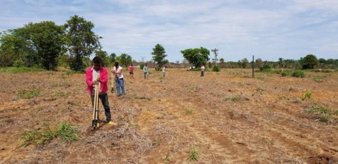 Governo Federal investiu quase R$ 1 milhão na recuperção de vegetação nativa em Terras Indígenas