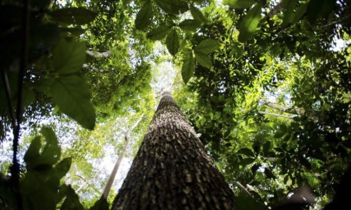 Governo atua em diversas áreas para preservação e desenvolvimento sustentável da Amazônia