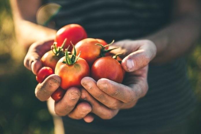 Jornada científica da Embrapa discute futuro do agronegócio