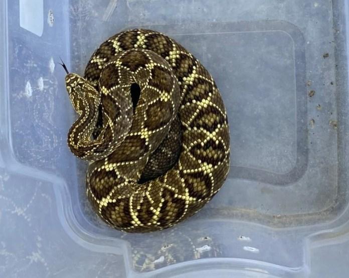 Polícia apreendeu cobras que eram mantidas em cativeiro no ES — Foto: Divulgação/Polícia Militar