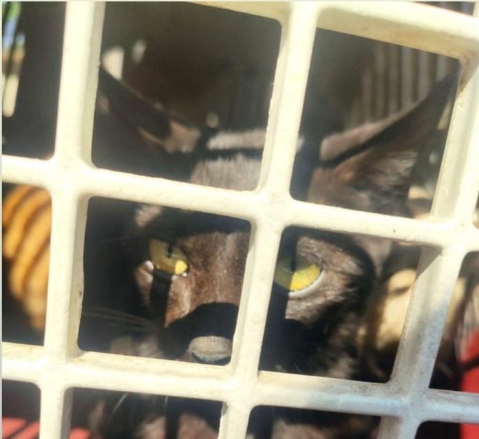 Gato foi resgatado após denúncias, no ES — Foto: Divulgação/ Janete de Sá