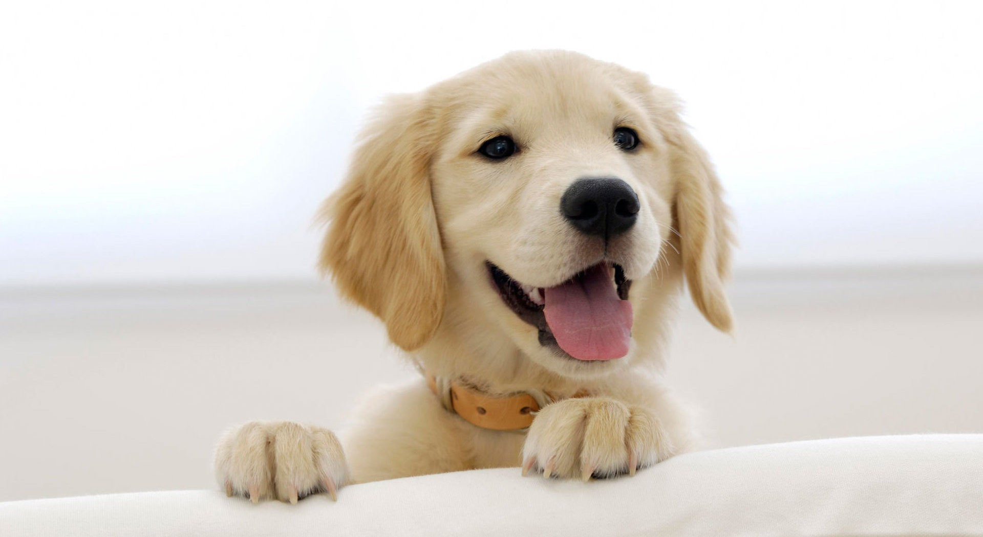 hd chiens dogs hd wallpapers