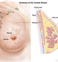 breast cancer is a disease in which malignant cancer cells form in the tissues of the breast  [ 3450 x 2550 Pixel ]