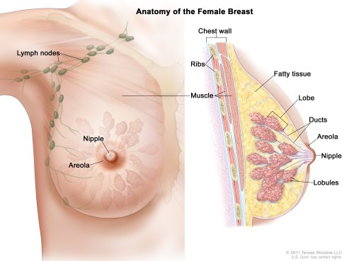 small resolution of breast cancer is a disease in which malignant cancer cells form in the tissues of the breast