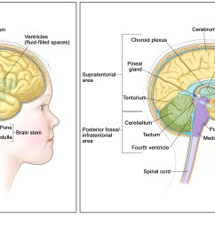anatomy of the brain the supratentorial area the upper part of the brain contains the cerebrum lateral ventricle and third ventricle with cerebrospinal  [ 3300 x 1883 Pixel ]