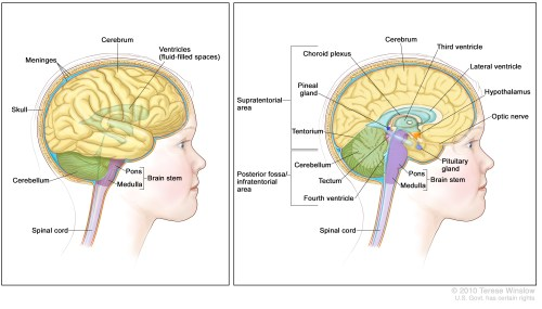 small resolution of anatomy of the brain the supratentorial area the upper part of the brain contains the cerebrum lateral ventricle and third ventricle with cerebrospinal