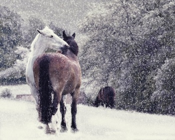 Charity Christmas Cards To Help Horses And Donkeys