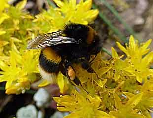 10 Best Plants For Bees And Butterflies