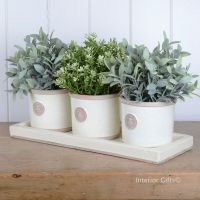 Kew Garden Set of Herb Pots & Tray Round in Ivory Cream ...